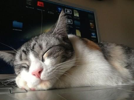 caturday20130105