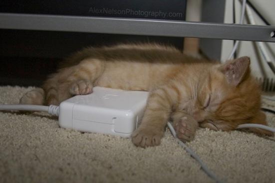 gato-quente